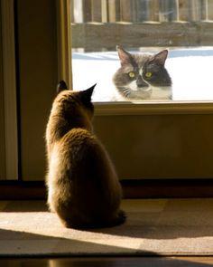 Stalker at the door