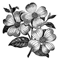 Vintage Clip Art and Illustrations | Flower Royalty Free Stock Vector Art Illustration