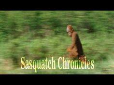 Sasquatch Chroncles SC EP:72 Down the rabbit hole part 3