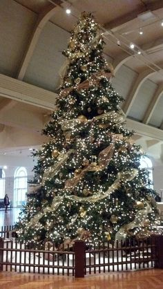 The giant tree in The Henry Ford museum