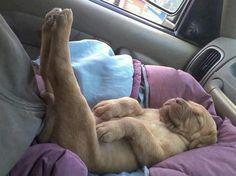 Gute Nacht: Zehn schlafende Hunde, die man sehen muss! - Seite 1