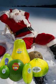 Look what Santa brings BACK to the north pole, tropical fruits. http://www.brookstropicals.com/ (http://www.brookstropicals.com/)