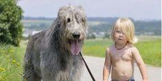 Als sein Hund stirbt, sagt dieser Junge etwas unglaublich Schönes