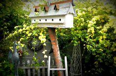 Bird apartments