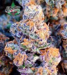 HerLooks Her Smell HerTaste She's Different From A Typical Og In A Very Good WayAnotherLook At Our Hell'sFire #7 Pheno @hightimesmagazine CannabisCup Indica Entry  Collab With @greenwolf_cali & @crockett420 Grown By SeedBy @desertheart09  #CannabisCup2016 #805Oiler2XWinner #HellsFire #DesertHeartGardens #GreenWolfLA #CrockettFamilyFarms #DNAGenetics #Frosty by desertheartcollective