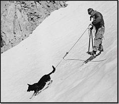dog steep slope - Google Search Call Of The Wild, Dog Runs, Batman, Superhero, Google Search, Dogs, Fictional Characters, Art, Art Background