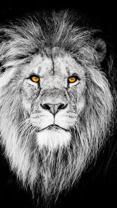 Monochrome, the beast, lion, muzzle, wallpaper Wallpaper Images Hd, Lion Wallpaper, Animal Wallpaper, Wallpapers, The Beast, Pumas, Animal Close Up, Lion Tattoo Sleeves, Lion Images