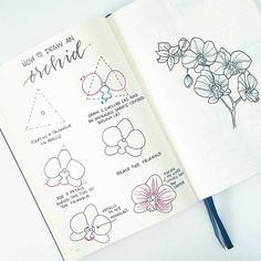 """2,318 Likes, 28 Comments - liz (@bonjournal_) on Instagram: """"It's #FlowerFriday.. how to draw an orchid! On the left are the individual steps, and on the right…"""""""