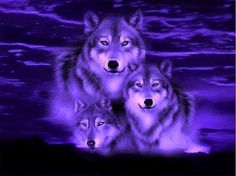 wolf pictures in fantasy White Wolf Hd Fantasy Pictures Dark