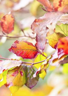 The Rainbow of #Fall