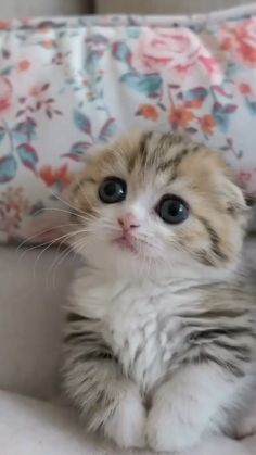 Discover recipes, home ideas, style inspiration and other ideas to try. Cute Baby Cats, Cute Cats And Kittens, Cool Cats, Kittens Cutest, Small Kittens, Cute Fluffy Kittens, Super Cute Kittens, Super Cute Animals, Cute Little Animals