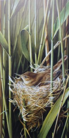 """""""Reed Warbler"""" by Terance James Bond. Signed Lithographic Print Edition of 500 copies Visible Image x Landscape Walls, Watercolor Landscape, Watercolor Art, Bird Pictures, Nature Pictures, Small Birds, Pet Birds, Bird Artwork, Bird Paintings"""