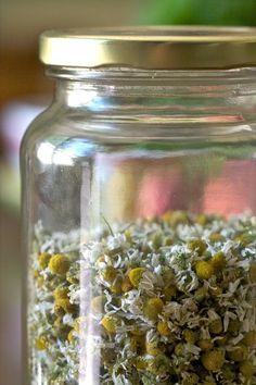 -BLEN: Aromaterapia- Dried Chamomile for Tea