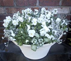 Simple methods to improve your perception of winter gardens Container Flowers, Container Plants, Container Gardening, Winter Plants, Winter Garden, Pretty Flowers, White Flowers, Hanging Flower Baskets, Balcony Plants