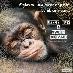 Nag l Goid Night, Good Night Sleep Tight, Good Night Blessings, Goeie Nag, Afrikaans Quotes, Good Night Sweet Dreams, Daily Thoughts, Good Night Quotes, Special Quotes