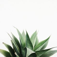 We picture some prett serif font right above this gorgeous plant. What would you do with this image?