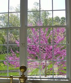 Cercis canadensis (Redbud, Judas Tree) loking wonderful outside a window. I have one to plant an dthey are beautiful when flowering eary Spring ! This is going outside my sunroom so I can see it every spring ! Judas Tree, Eastern Redbud, Pastel Shades, Back Gardens, Go Outside, Outdoor Spaces, Outdoor Structures, Windows, Flowers