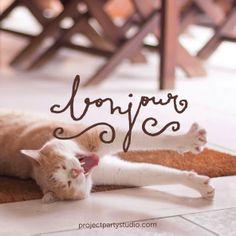 Bonjour #Handlettering & #photo > www.projectpartystudio.com #gato #cat #trompudín #bonjour