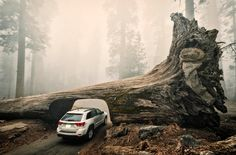 Sequoia National Park, Tulare County, California, United States