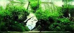 "Aquascape GREEN DIAMOND by PETER ANDRAS . Plants : Anubias barteri var. nana Petite Cryptocoryne beckettii ""petchii"" Microsorum pteropus Trident Valisneria Nana Vesicularia ferriei Weeping"