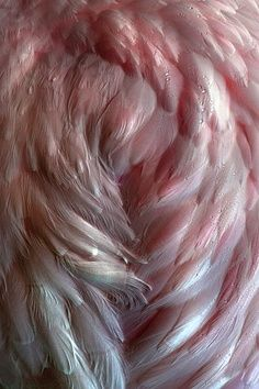 This example of texture is smooth and soft. I pinned it because I imagine that I could feel every part of the soft piece of feather. I Believe In Angels, 3d Texture, Feather Texture, Textile Texture, Pink Feathers, Ostrich Feathers, Angel Art, Angel Wings, Textures Patterns