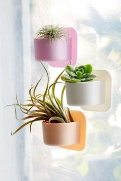 Tooletries Mini Silicone Succulent Wall Planter   Urban Outfitters