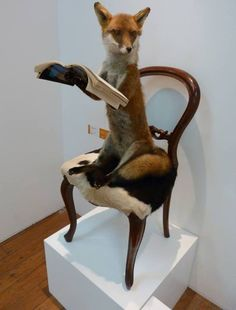 Classy fox. #Taxidermy