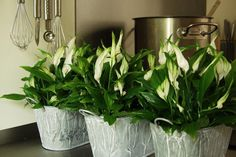 Indoor Plants, Flowers, Gardening, Google, Air Purify Plants, Inside Plants, Lawn And Garden, Royal Icing Flowers, Flower