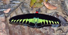 10 Most Beautiful Winged Insects – Who Says Bugs Are Icky?
