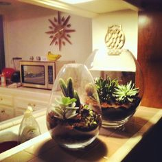 I made terrariums today.  succulents and cacti.