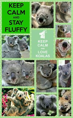 Keep Calm and Love Koalas!