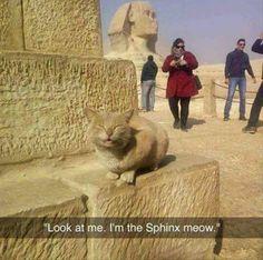~I ❤ Egypt .  They know who their true gods are. I iz one of them.