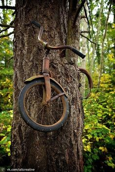 The boy left his bicycle chained to a tree when he went to war in 1914. He never returned and the tree was left with no choice but to grow around the bike. Incredibly, this bike is there for 98 years!