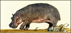 hippos paintings | Hippo original watercolor painting by Juan Bosco