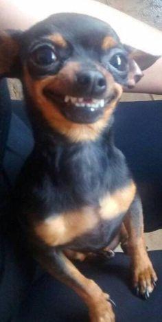 Cute Animal Memes, Funny Animal Quotes, Animal Jokes, Cute Animal Pictures, Funny Dog Faces, Cute Funny Dogs, Cute Funny Animals, Meme Faces, Baby Animals Super Cute