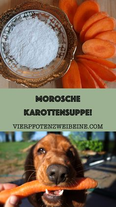 Morosche Karottensuppe Sometimes the dog's digestive tract needs some support. Moro's carrot soup is a first aid option for diarrhea. Food Dog, Three Little Birds, Shark Swimming, Quotes Deep Feelings, Orange You Glad, Life Lesson Quotes, Life Quotes, Dog Names, Cosmos