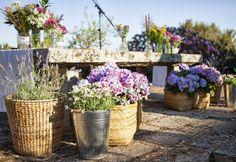 Church Wedding Ceremony, Wedding Altars, Our Wedding, Country Wedding Inspiration, Rustic Theme, Ceremony Decorations, Planting Flowers, Beautiful Flowers, Wedding Planner