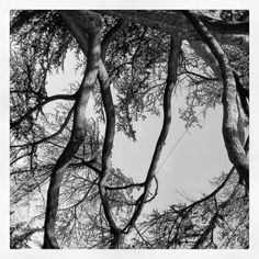 #trees in the quaint town of #stratford