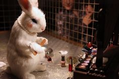 This bunny is thinking she shouldn't have gotten wasted before putting her makeup on