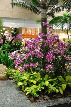 Image from http://previews.123rf.com/images/petervick167/petervick1671301/petervick167130100535/17494369-orchids-on-display-Changi-Airport-Singapore-Stock-Photo.jpg.