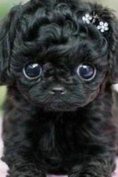 My over cut dog!!!!!xxxx