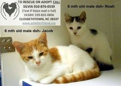 THESE SWEET BOYS ARE  6-MONTH-OLDS JACOB AND NOAH! BOTH BOYS NEED A FOSTER/ADOPTER/RESCUE ASAP AND WOULD LOVE TO CUDDLE WITH YOU ON A COLD NIGHT! BOTH ARE AT BLADEN COUNTY ANIMAL CONTROL AND SHELTER. PLEASE SEE THE CONTACT INFORMATION ON THE LISTING PICTURE! THANK YOU!