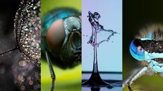 A deep dive into the world of macro photography featuring four tutorials to get you going.