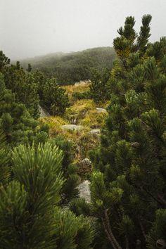 Fog on the hill Solisko Roots, Polish, Autumn, River, Seasons, Landscape, Nature, Photography, Painting