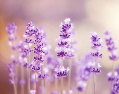 lavender wall - Google Search