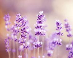 lavender wall - Google Search