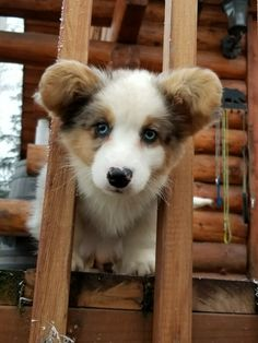 This floofer is so adorable!