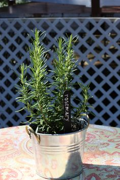 Looking for simple, elegant and delicious smelling centerpieces? How about some potted herbs! Lavender, rosemary and pineapple mint... oh my! Thanks @Beth Zemetis