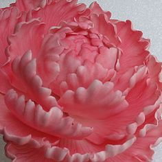 gumpaste flowers--great pictures for reference, but no tutorials