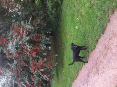 Autumn walks with Mummy mean it's nearly my birthday!